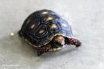 Tortoise [colombia_6503]