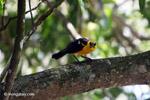 Bird [colombia_6520]