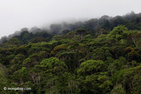 Rain forest of Isla Gorgona off Colombia. Photo by: Rhett A. Butler.