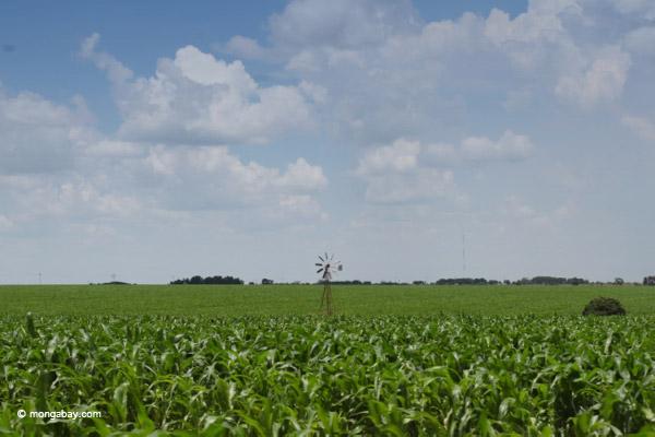 Corn growing in Colombia. Photo by: Rhett A. Butler.