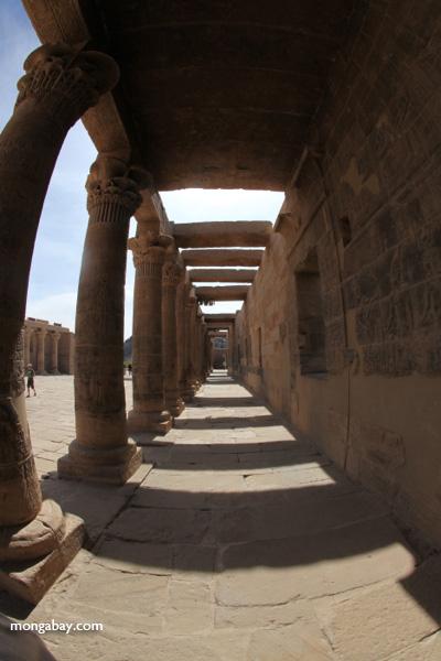 Philae Temple [egypt_0091]