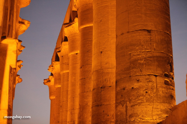 Luxor temple [egypt_0351]