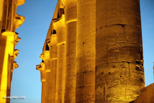 Luxor temple [egypt_0352]