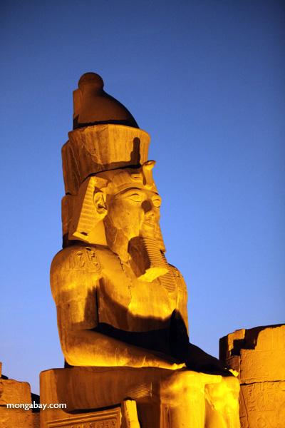 Luxor temple [egypt_0356]