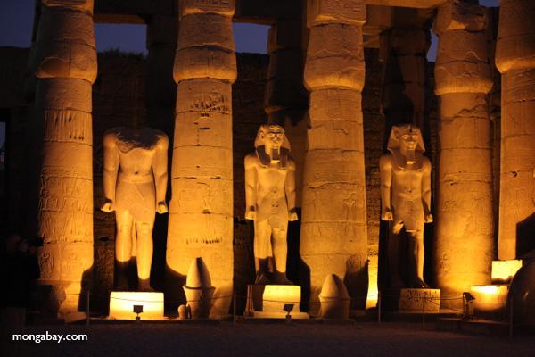 Luxor temple [egypt_0358]