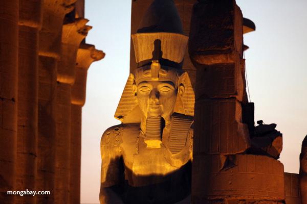 Luxor temple [egypt_0360]