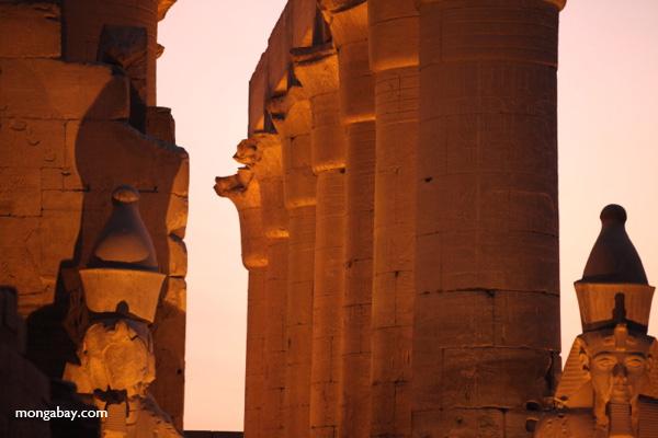 Luxor temple [egypt_0362]