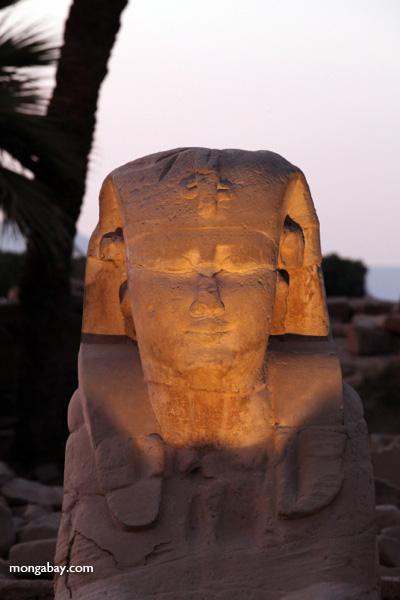 Luxor temple [egypt_0368]
