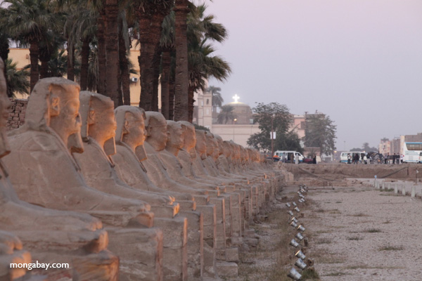 Avenue of Sphinxes [egypt_0378]