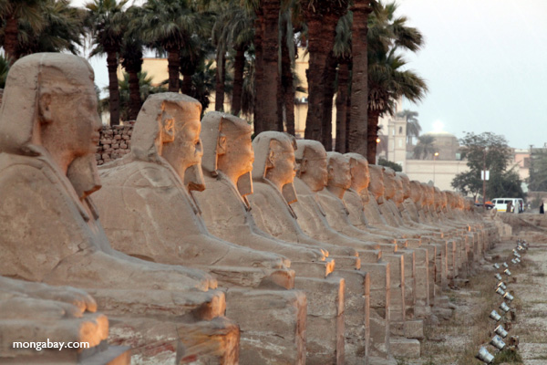 Avenue of Sphinxes [egypt_0379]
