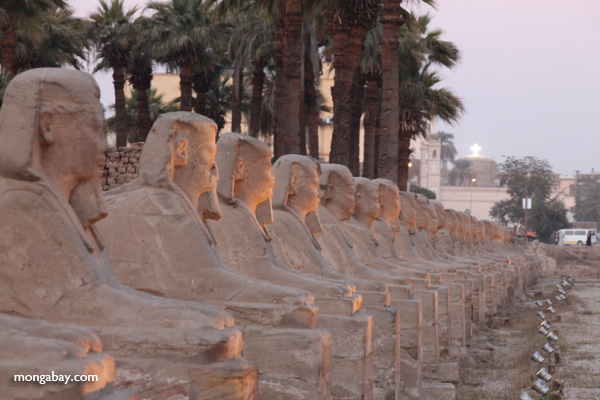 Avenue of Sphinxes [egypt_0380]