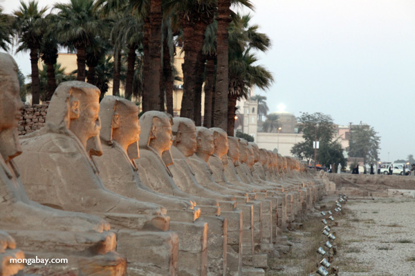 Avenue of Sphinxes [egypt_0381]