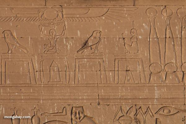 Temple of Kom Ombo [egypt_0494]