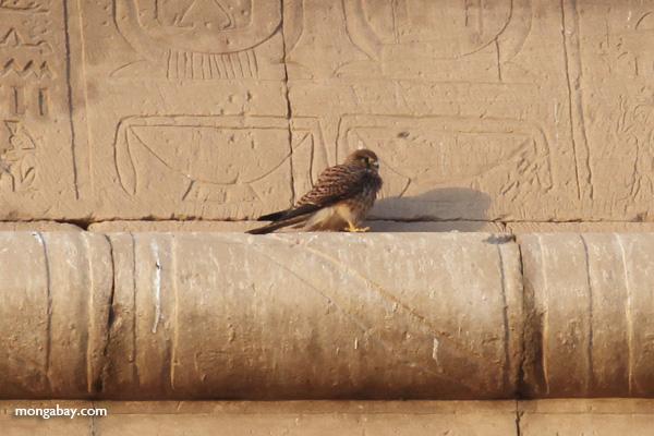 Temple of Kom Ombo [egypt_0498]
