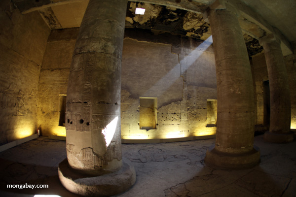 Abydos [egypt_0753]
