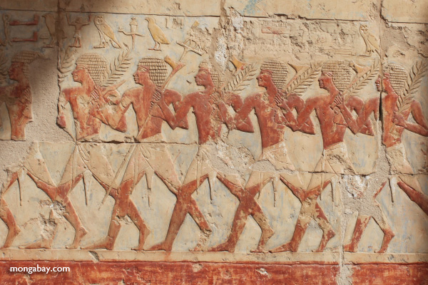 Mortuary Temple of Queen Hatshepsut [egypt_0915]