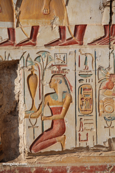 Abydos [egypt_1173]