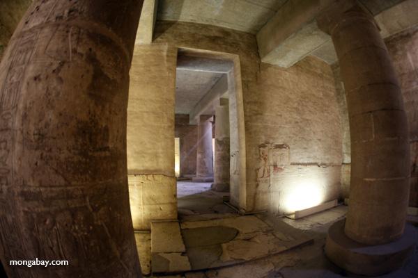 Abydos [egypt_1221]