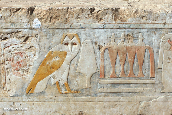 Hieroglypihcs at the Mortuary Temple of Queen Hatshepsut [egypt_1345]