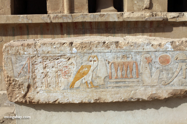 Hieroglypihcs at the Mortuary Temple of Queen Hatshepsut