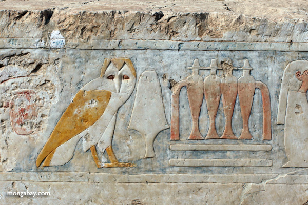 Hieroglypihcs at the Mortuary Temple of Queen Hatshepsut [egypt_1347]