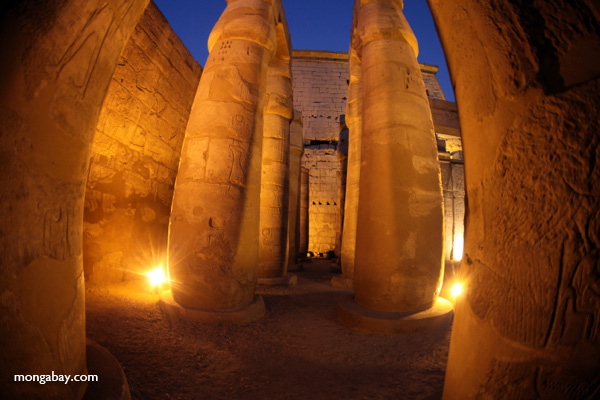 Luxor Temple [egypt_1441]