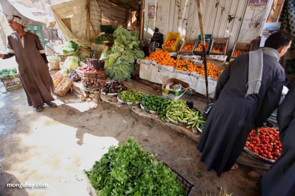 Markets in Esna