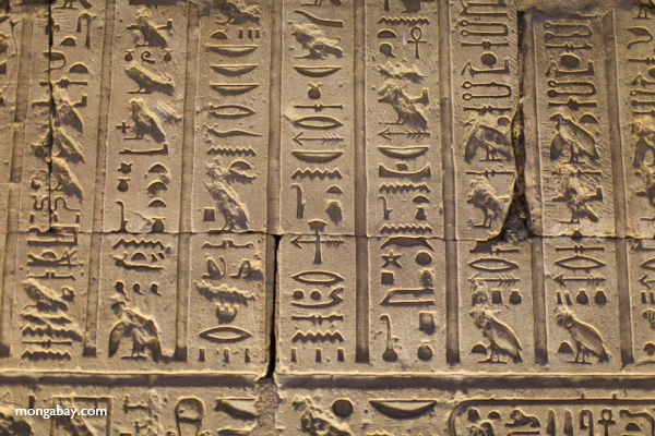 Hieroglyphics at Edfu Temple [egypt_1557]
