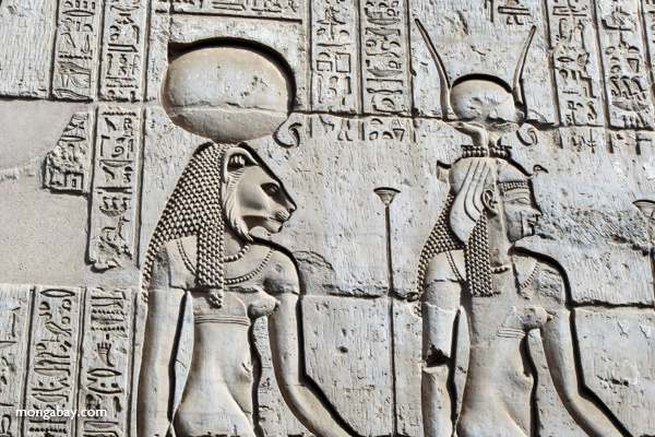 Wall reliefs at the Temple of Kom Ombo