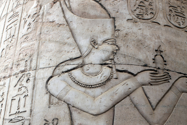 Wall carvings at the Temple of Kom Ombo [egypt_1669]