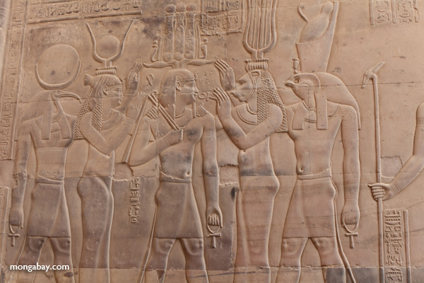 Wall carvings at the Temple of Kom Ombo