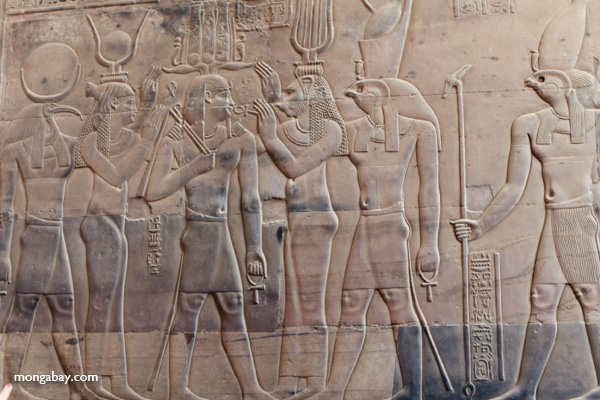 Wall reliefs at the Temple of Kom Ombo [egypt_1674]