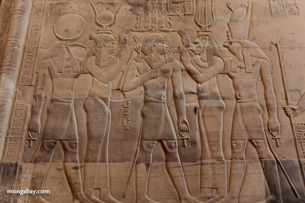 Wall carvings at the Temple of Kom Ombo [egypt_1678]