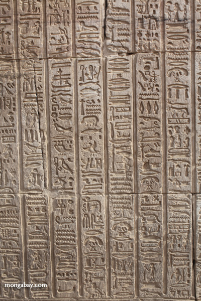 Hieroglphics on the Temple of Kom Ombo [egypt_1698]