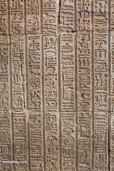 Hieroglphics on the Temple of Kom Ombo [egypt_1699]