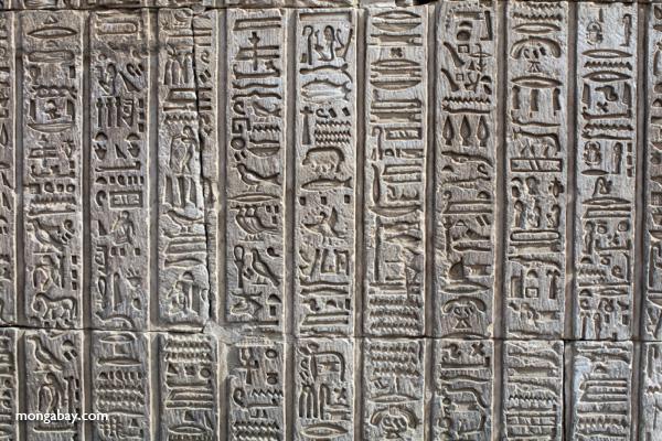 Hieroglphics on the Temple of Kom Ombo [egypt_1702]