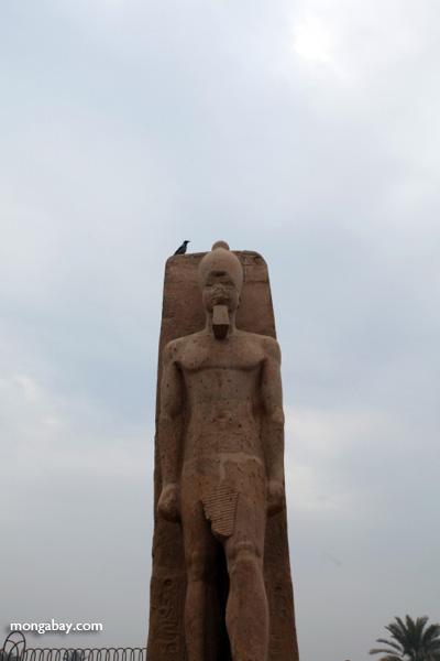 Limestone Statue of Ramses II [egypt_1947]