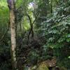 Rainforest near Jantho