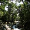 Rainforest creek near Jantho