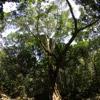 Aceh rainforest