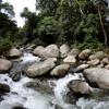 Rushing rainforest river