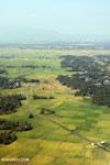 Rice fields near Banda Aceh [aceh_0006]