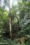 Rainforest near Jantho [aceh_0110]