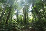 Aceh Rainforest [aceh_0172]