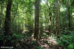 Aceh Rainforest [aceh_0176]