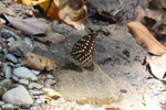 Butterfly in Aceh [aceh_0221]