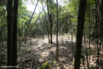 Forest clearing in Aceh