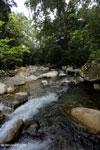 Rainforest river [aceh_0270]