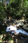 Rainforest river [aceh_0279]