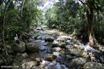 Rainforest river [aceh_0282]